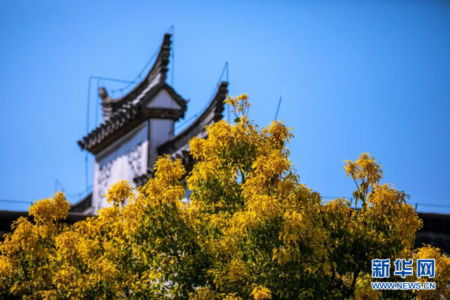 初冬暖阳,来台儿庄古城看最美色彩!