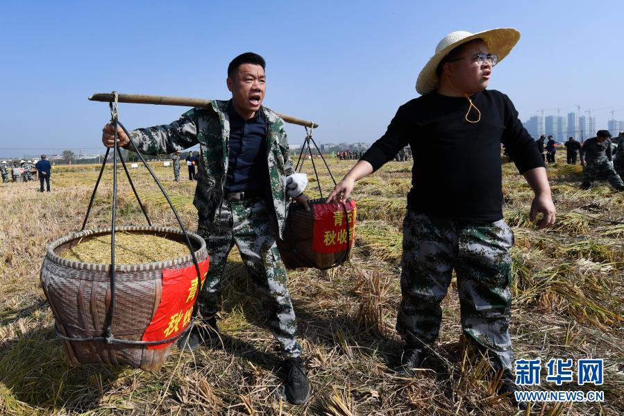 秋收劳动竞赛 传承农耕文化