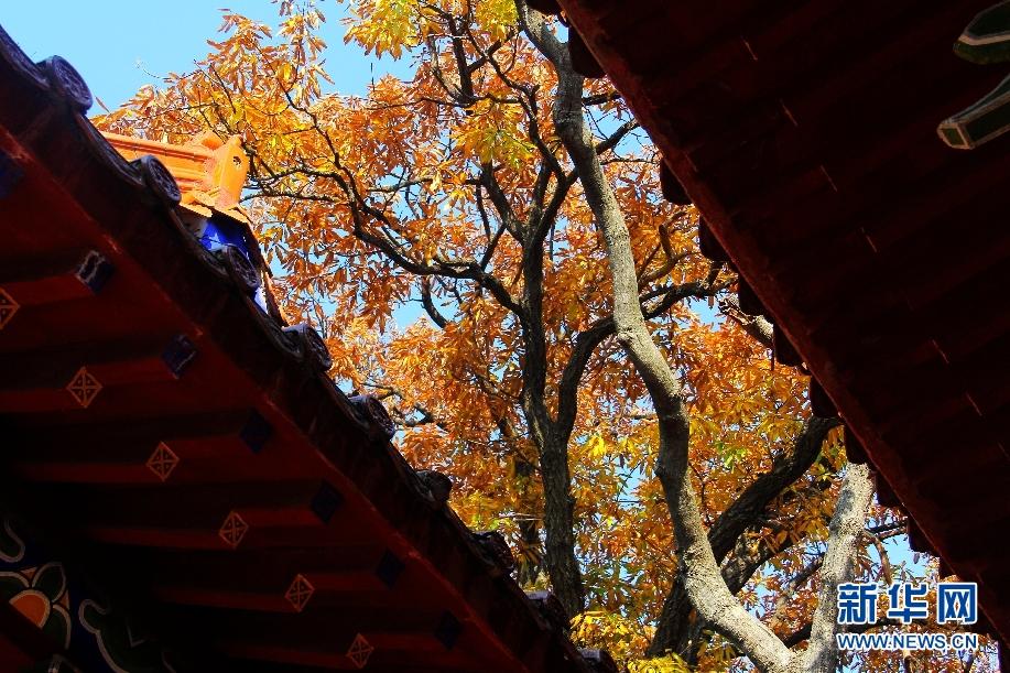 四季芳华,初冬最美