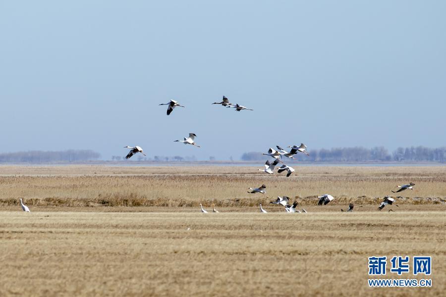 美丽生态激活美丽经济——内蒙古兴安盟走上绿富同兴的发展新路