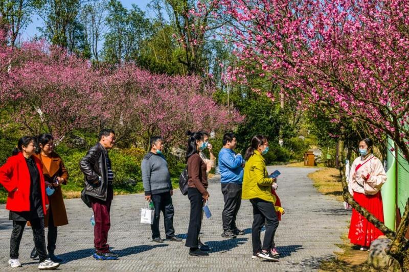 新春佳节,常德5A桃花源迎来自驾游热潮