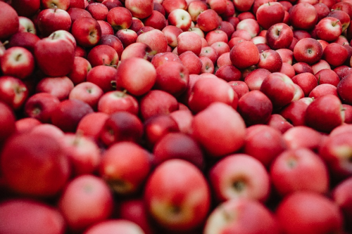 新西兰乐淇®(Rockit® )苹果2021年开季首发