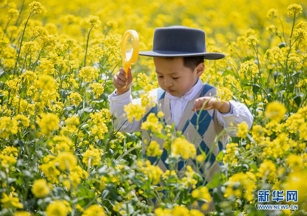 青岛:周末赏花再添打卡地 西海岸油菜花开成海