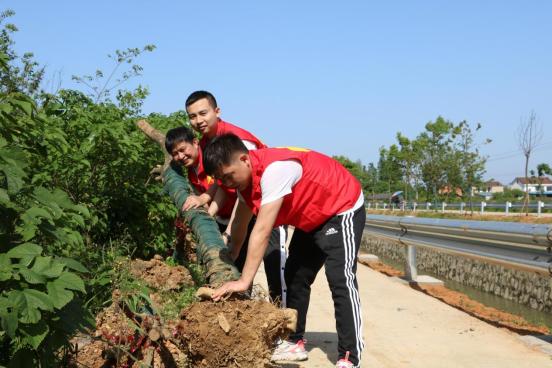 长庚街道党工委组织义务植树添绿意