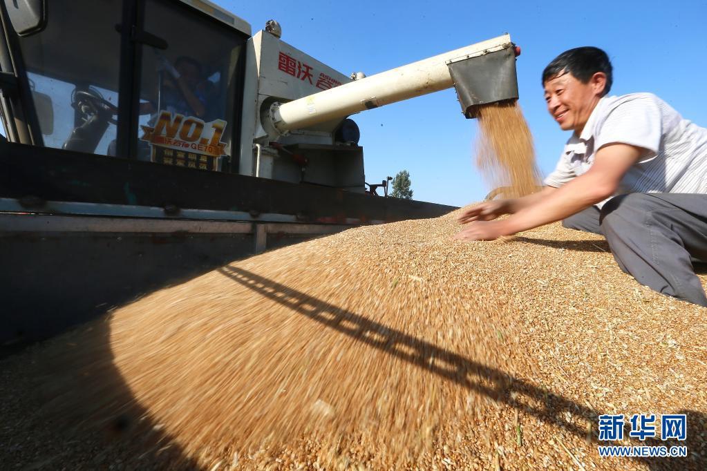 麦收正忙 颗粒归仓