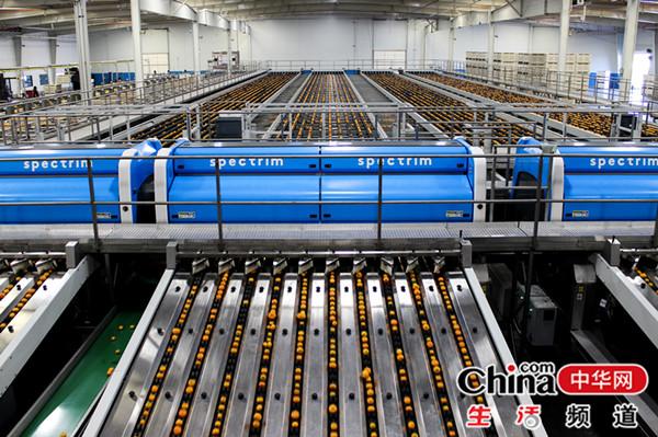 """从""""一鸡独飞""""变""""产业群飞"""" ——中国鲜禽第一股湘佳股份的蝶变之旅"""