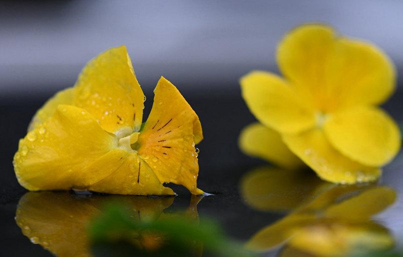 春雨润物细无声