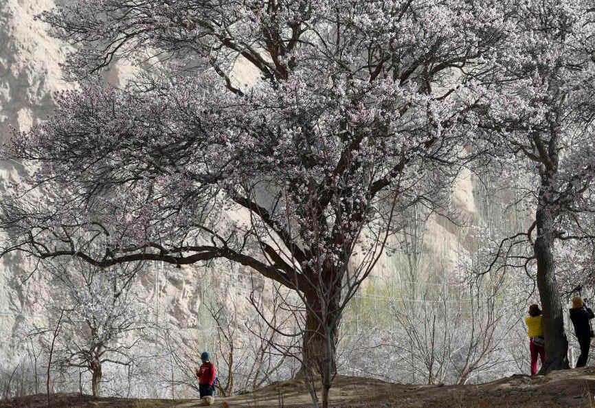 帕米尔高原:春暖花开引客来