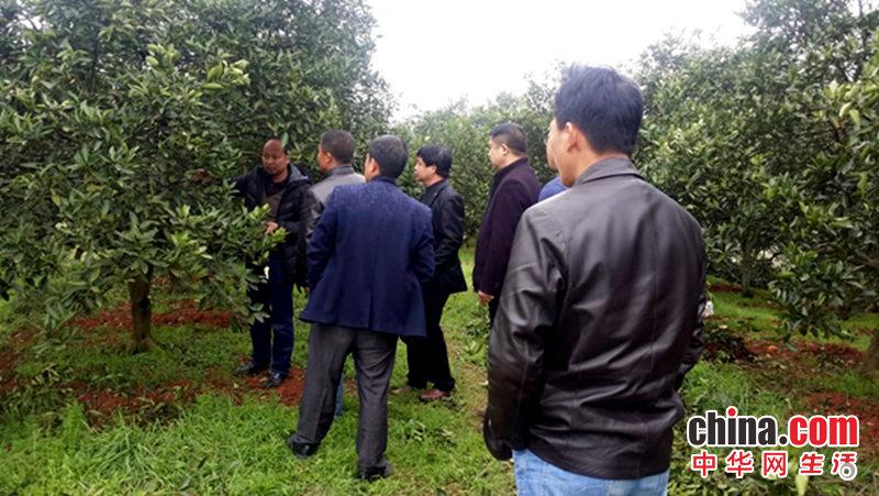 湖南新宁全域推进脐橙标准化生产