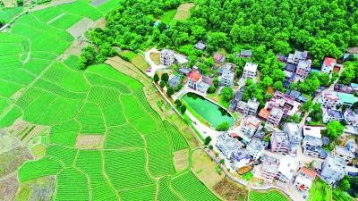 湖南新田:大力调整产业结构 积极发展特色种植产业