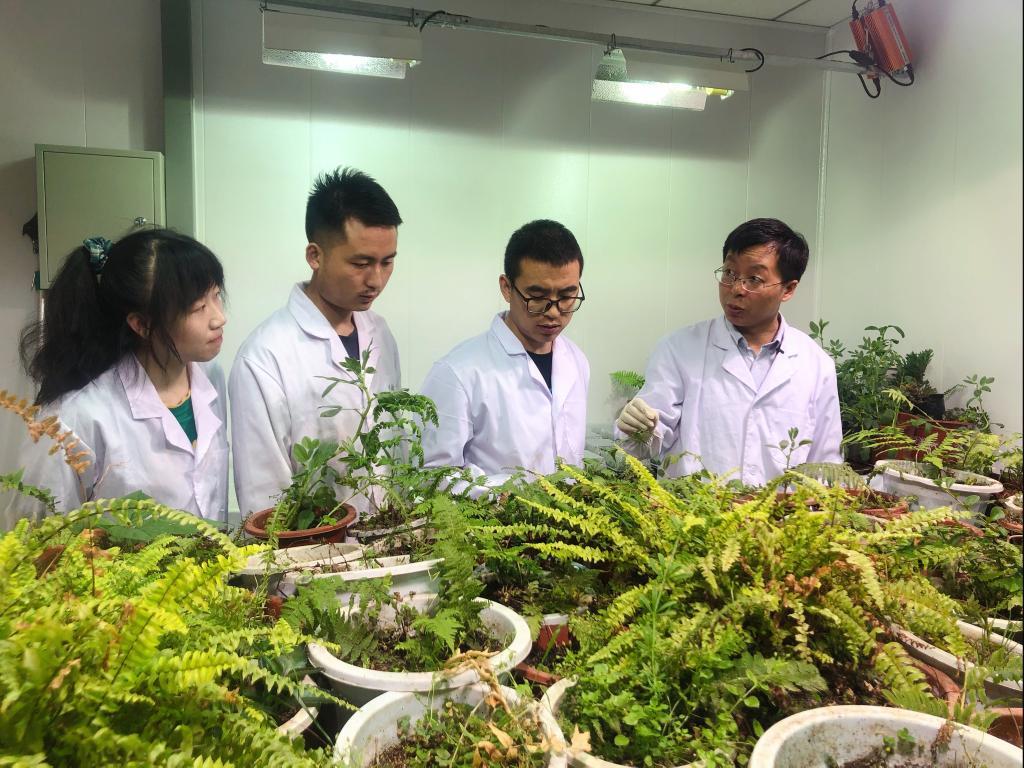 """新华全媒+ 如何""""顶住""""干旱?来看看这些植物的""""求生""""绝招"""