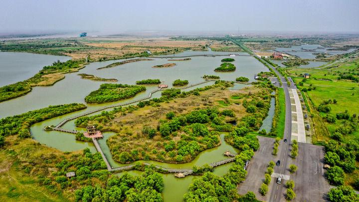"""黄河三角洲成为600万只鸟儿的""""家园"""""""