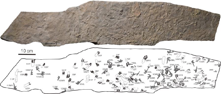 """1.35亿年前翼龙留下114个""""爪印"""",它们在干啥?"""