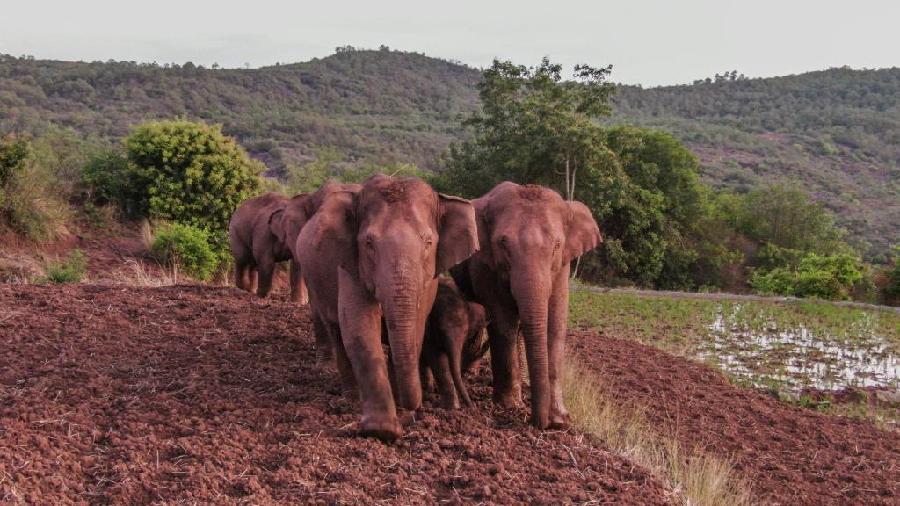 """一路""""象""""北,千百万年来发生过这么多回!"""