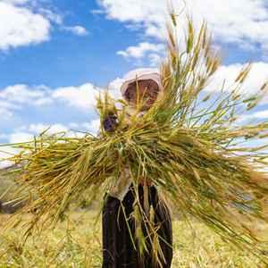 """数说宝""""藏""""·70年巨变丨西藏农牧业跨越式发展结出""""金色""""果实"""