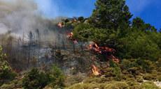 土耳其:林火持续