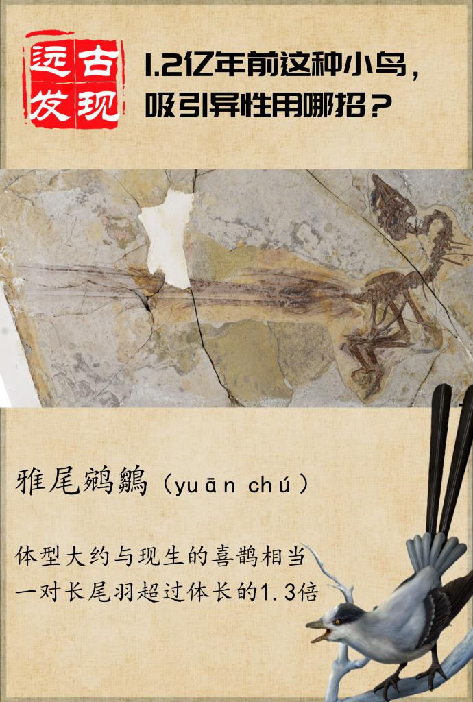 1.2亿年前这种小鸟,吸引异性用哪招?
