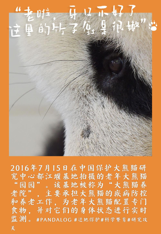 """镜观中国丨大熊猫的30张拍立得:一部保护""""滚滚""""的PLOG"""